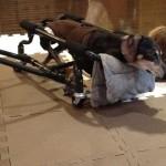 ベルの車椅子