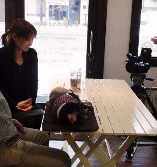 【YBCピヨ卵ワイド430】2012年3月放送